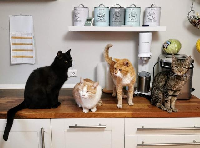 特殊清掃 猫屋敷化の問題